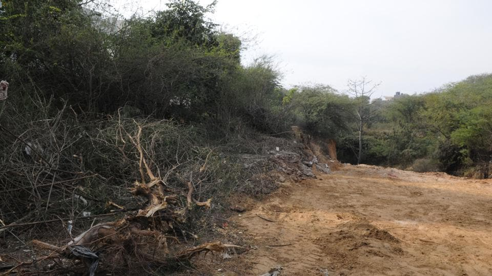 Tree felling incidents are frequently reported in Gurgaon.