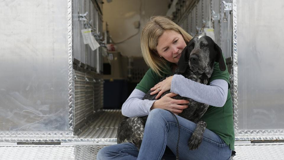 Humane Society International's Director of Companion Animals and Engagement Kelly O'Meara sits on Pittsburgh Aviation Animal Rescue Team's Transport Trailer holding Bonny, a dog rescued from a South Korean dog meat farm by Humane Society International (HSI), in New York.  (Andrew Kelly / AP Images)
