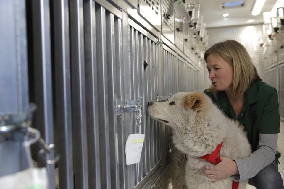 The Humane Society International is responsible for saving 46 dogs that would otherwise have been slaughtered. Humane Society officials said the dogs that arrived in New York late Saturday night had awaited death in dirty, dark cages, and were fed barely enough to survive at a farm in Goyang, South Korea. (Andrew Kelly / AP Images)