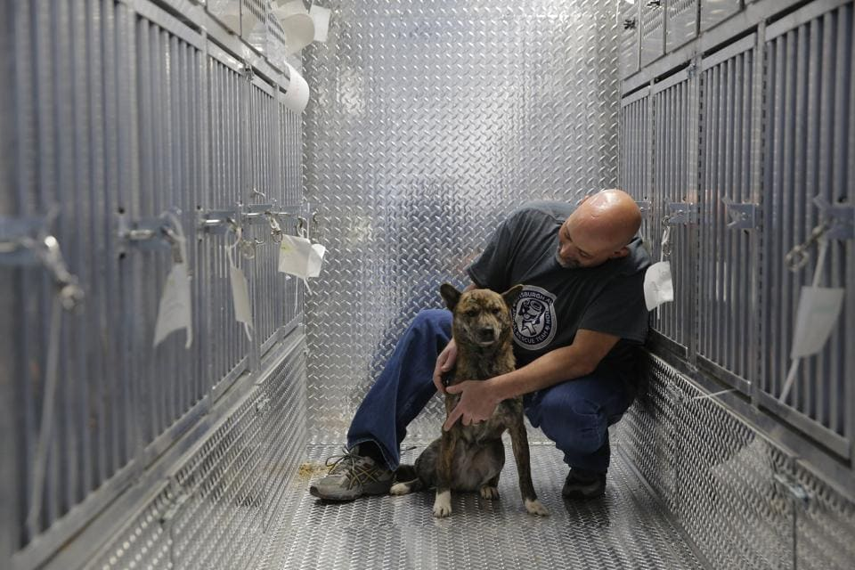 Pittsburgh Aviation Animal Rescue Team (PAART) volunteer David Manko sits on board PAART's Transport Trailer with a dog rescued from a South Korean dog meat farm. (Andrew Kelly / AP Images)