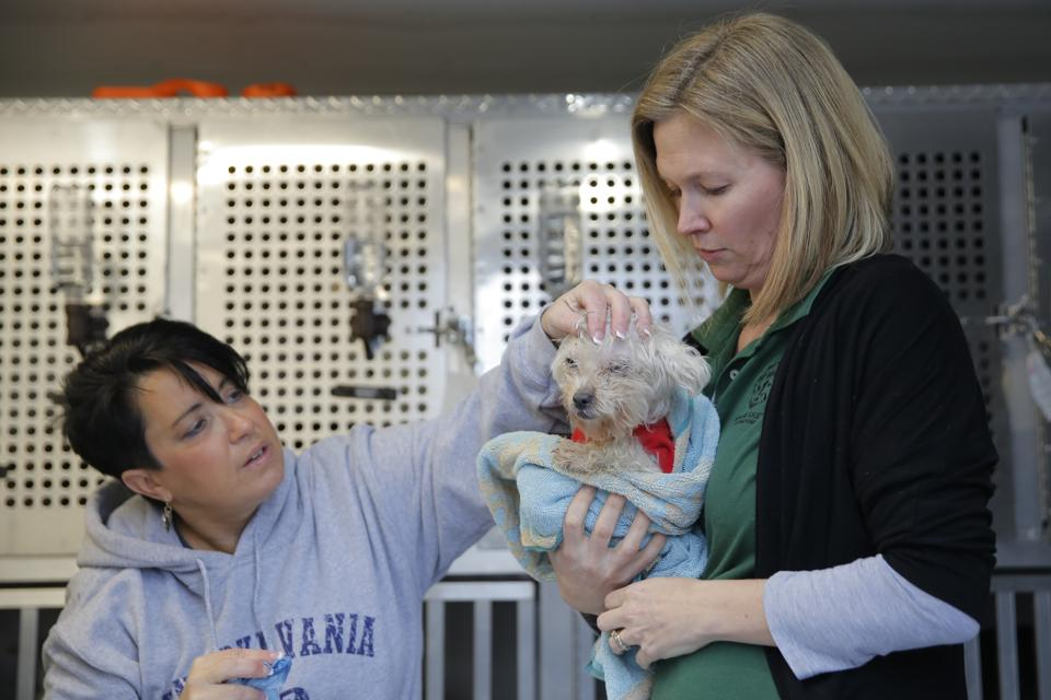 Pittsburgh Aviation Animal Rescue Team Director of Operations Lynda Manko and Kelly O'Meara, Humane Society International's Director of Companion Animals and Engagement, comfort a dog rescued from a South Korean dog meat farm. (Andrew Kelly / AP Images)