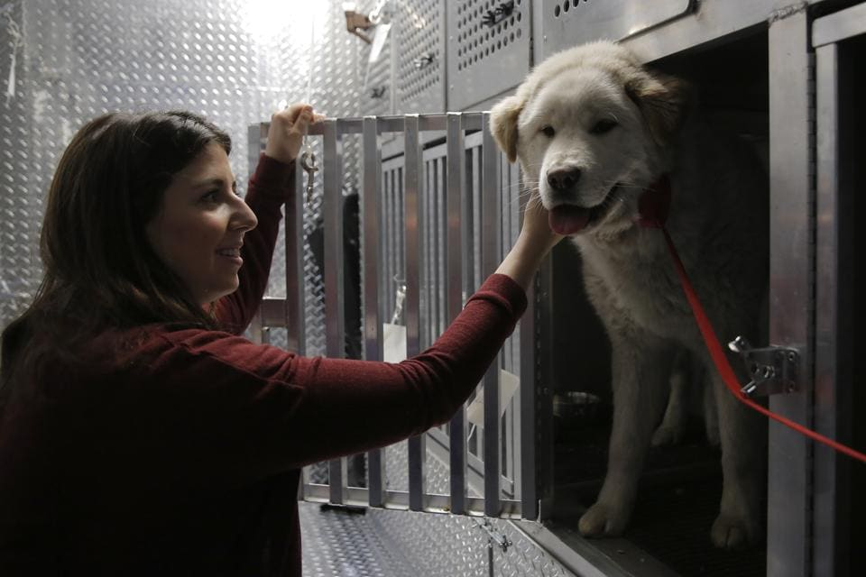 This is the seventh dog meat farm the organization has closed in South Korea so far, saving more than 800 dogs as part of its campaign across Asia to end the killing of dogs for consumption. (Andrew Kelly / AP Images)