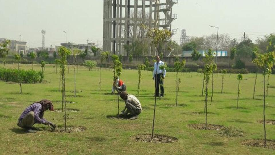 The Noida authority horticulture staff check saplings in a park in Phase-II area on Tuesday.