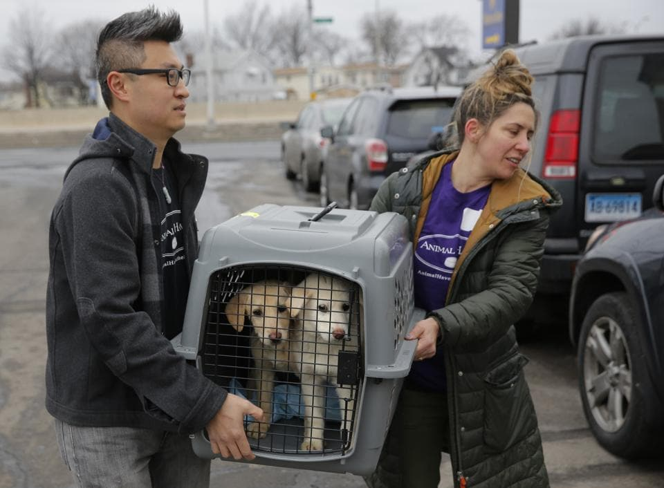 A crate holding two puppies rescued from a South Korean dog meat farm are loaded onto an animal transport vehicle near Kennedy Airport by Animal Haven Director of Operations Mantat Wong, left, and volunteer Nicole Smith, in the Queens borough of New York. (Andrew Kelly / AP Images)