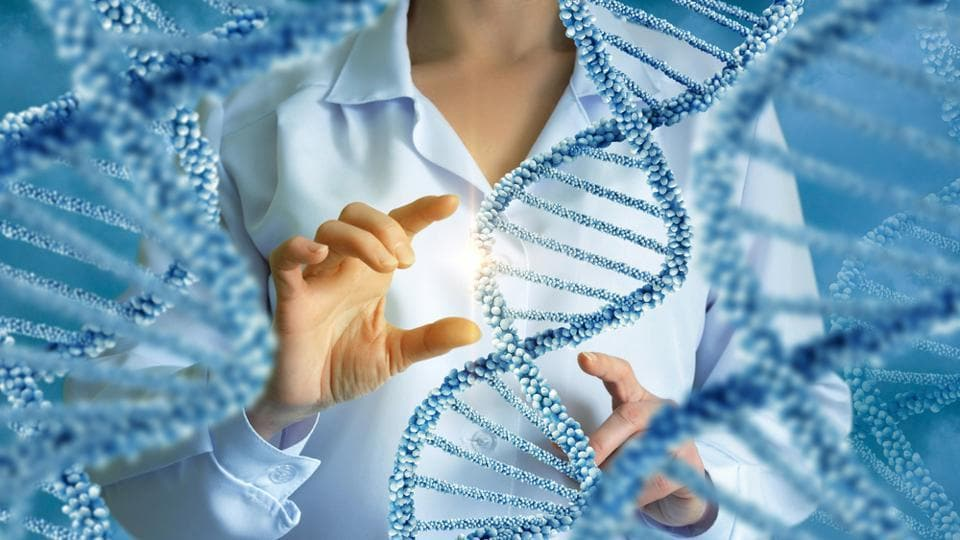 Genes shape the anatomy and functional organisation of the brain.