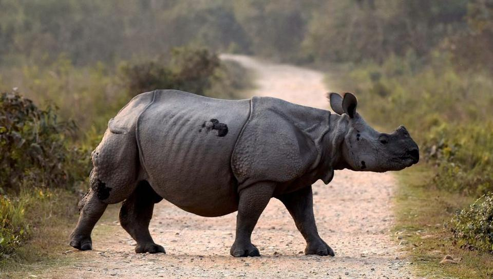 The Indian government said the BBC documentary on Kaziranga National Park misrepresented the immunity provided to forest staff