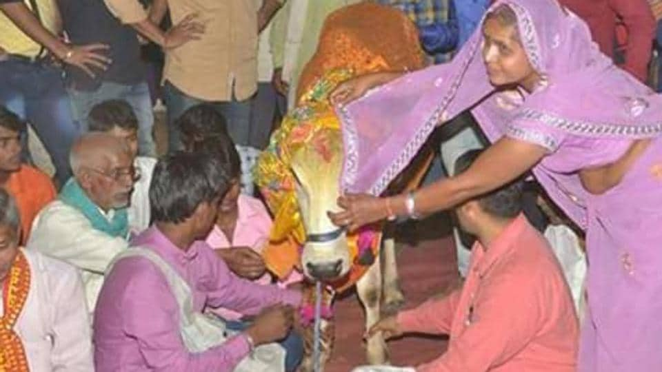People perform a mass wedding of bulls and cows at a cow shelter in Deeg town of Bharatpur district in Rajasthan.