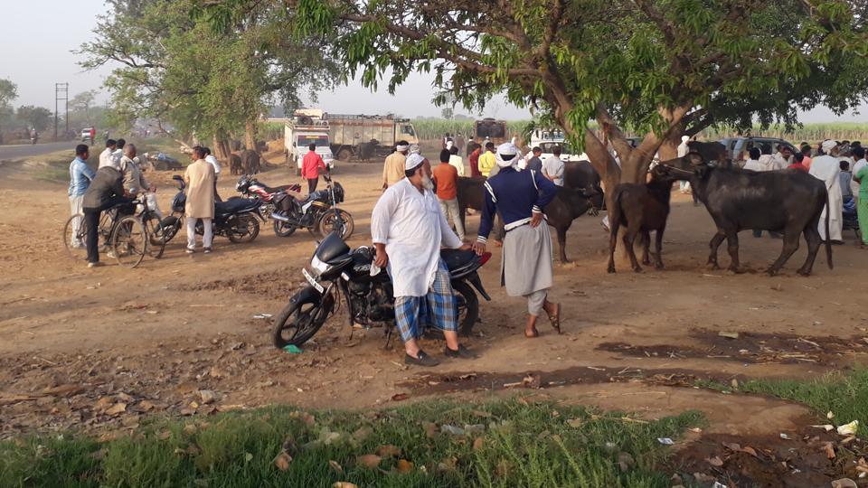 Uttar Pradesh,Slaughterhouses,Cattle Farmers