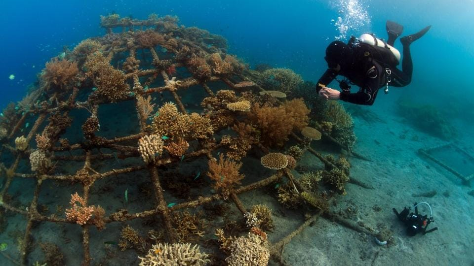 Coral reefs are like underwater gardens and one of the most diverse ecosystems on earth providing food and shelter to millions of species.