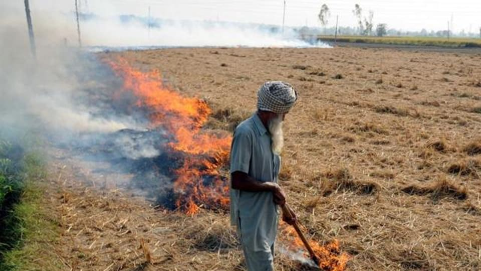 Despite the ban, farmers continue burning paddy stubble in the state.
