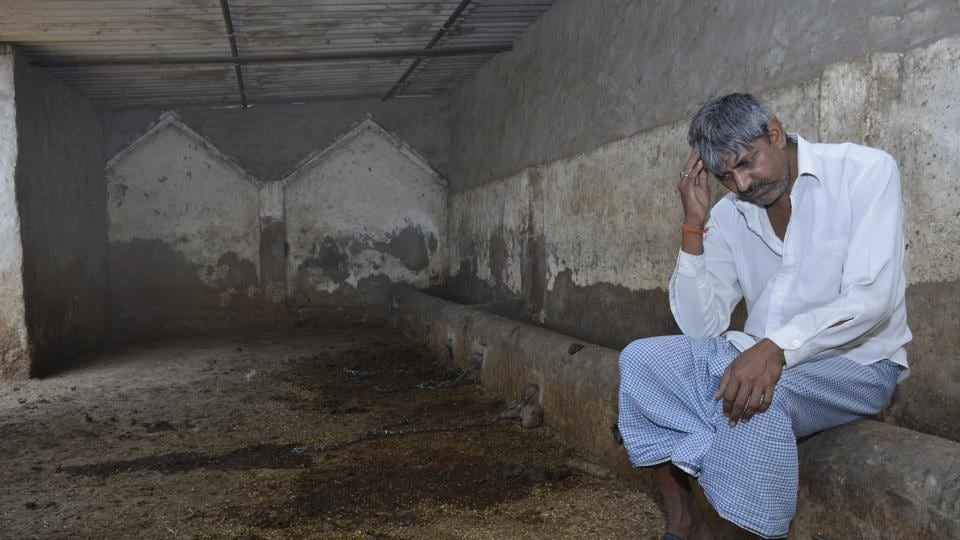 Shyam Singh, whose nine bovines were stolen by rustlers, says he has no livelihood left.