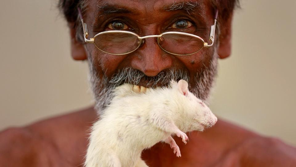 A farmer from the southern state of Tamil Nadu poses as he bites a rat. (REUTERS)