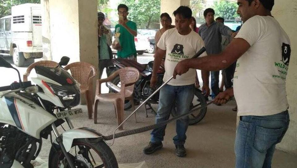 The cobra got trapped in the wheels of a motorcycle parked in Exotica East, a high-rise in Indirapuram, on Thursday.