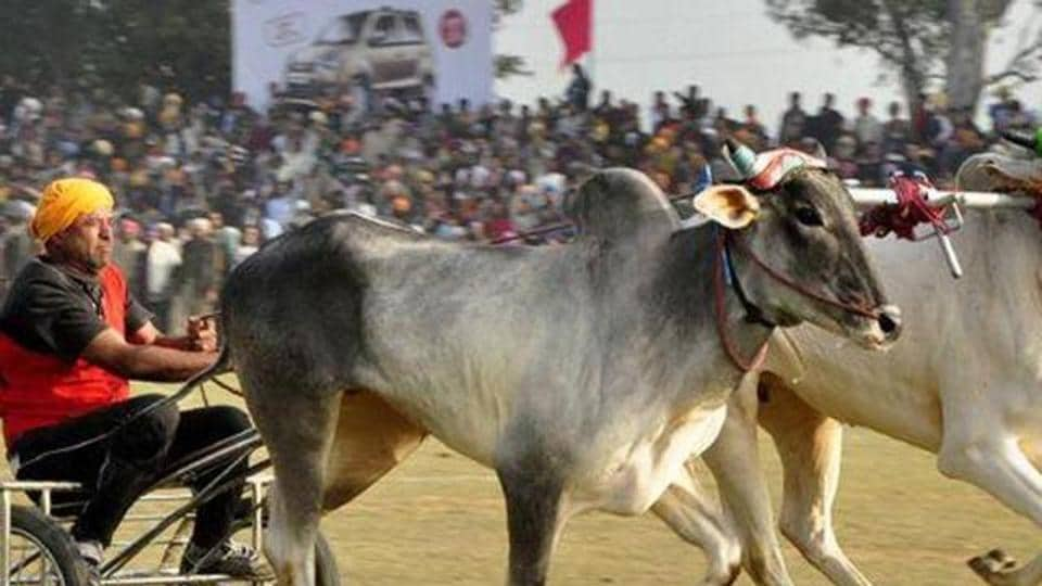 bullock-cart racing,Supreme Court,Prevention of Cruelty to Animals Act