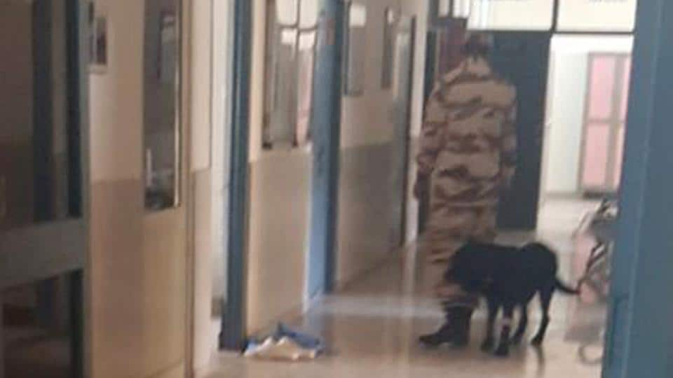 The PM's security dog being taken away from the GADVASU hospital in Ludhiana on Friday, March 31.