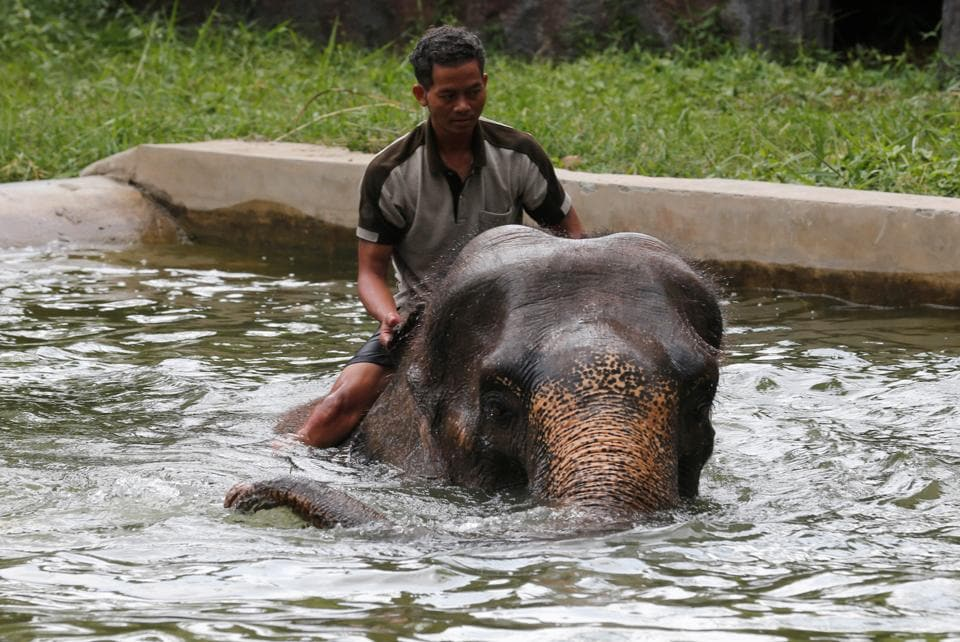 A mahout sits on an elephant as they play in a pool during a hot day at Dusit zoo in Bangkok, Thailand. (Chaiwat Subprasom / REUTERS)