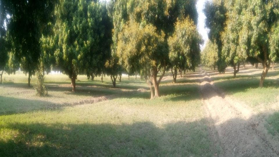 MGCUB,Central university,Land grab
