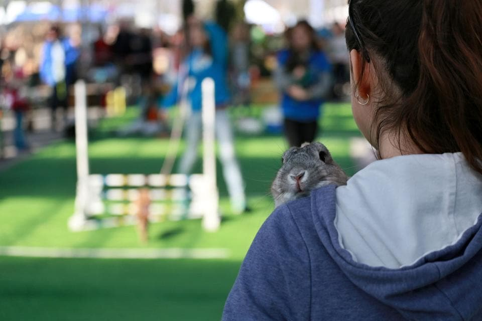 A woman holds her rabbit after an obstacle course. (RADEK MICA / AFP)