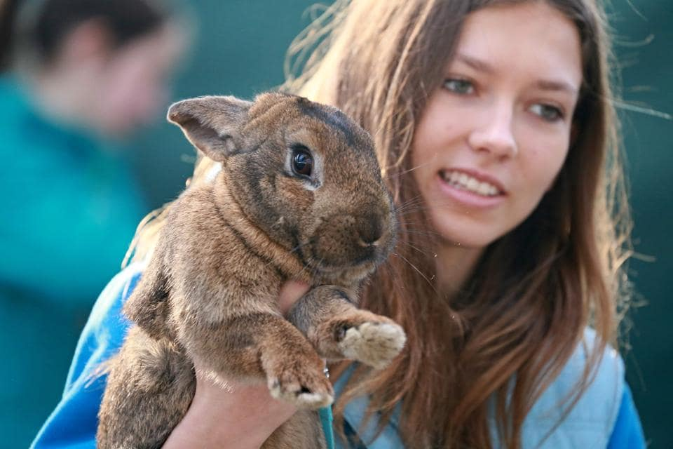 A girl holds her rabbit as she watches a rabbit track and field competition. (RADEK MICA / AFP)