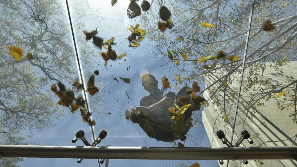 A man clears fallen spring leaves from a skylight in a high rise building in Central Delhi. When Lutyen's Delhi was initially built there was a conscious effort to plant trees that did not shed leaves through the seasons.  (Raj K Raj/HT PHOTO)
