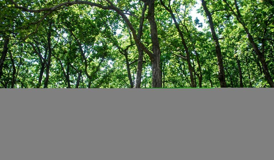 Скачать Forest Торрент - фото 8