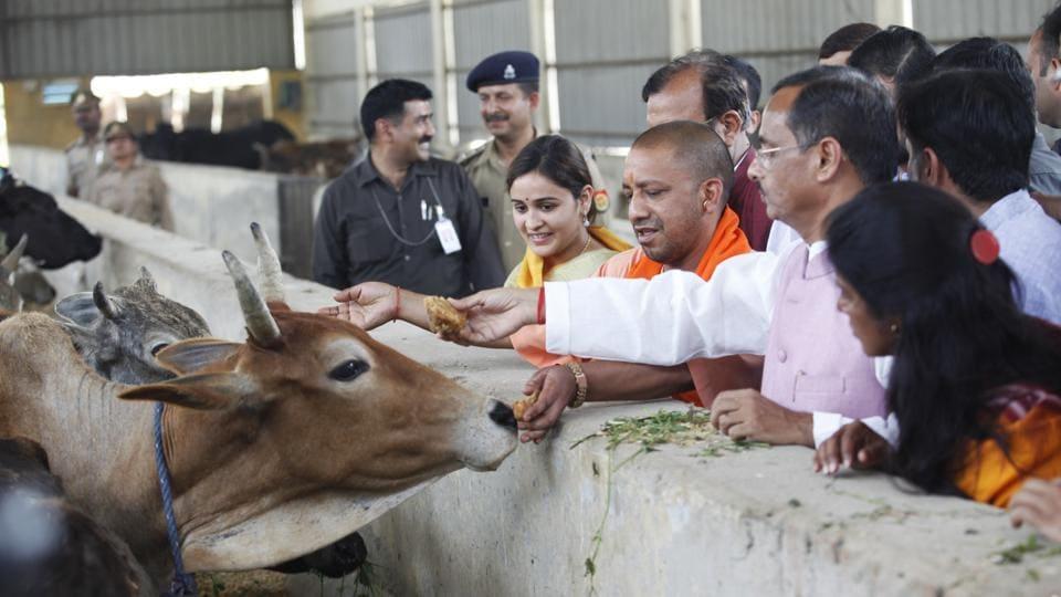 UP chief minister Yogi Adityanath feeds cows flanked by Mulayam Singh Yadav's daughter-in -law Aparna Yadav and deputy CM Dinesh Sharma during his visit to Kanha Upvan.