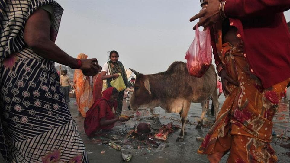 """Cow protectionism was the """"spirit"""" behind the country's freedom movement as she defended Chief Minister Yogi Adityanath's decision to shut illegal slaughter houses."""