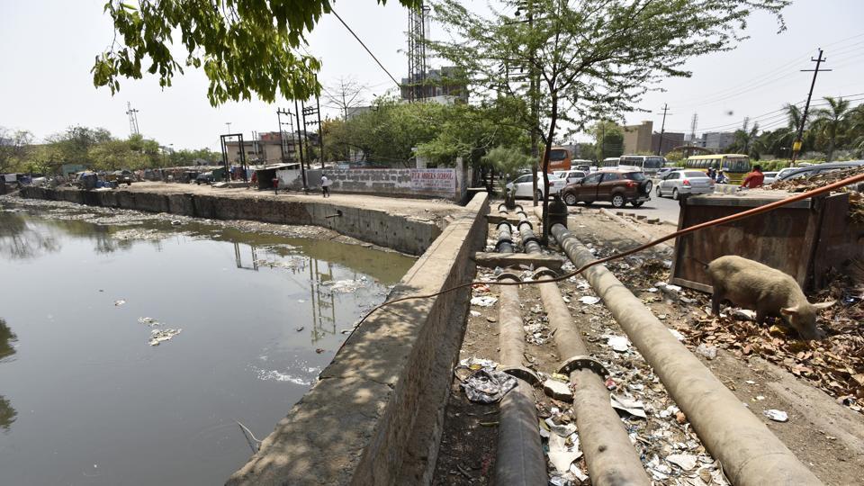 Save Yamuna,Noida authority,Hindon pollution