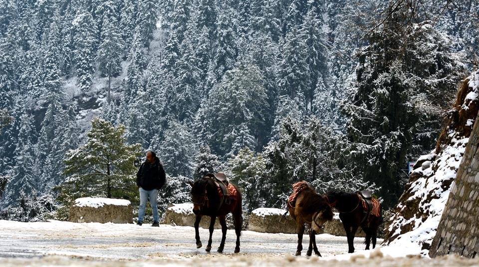 Horses cross snow-covered roads after fresh snowfall in Kufri near Shimla, early this March. Crowds hoping to escape the harsh heat will be flocking to Shimla and other hill stations in the summer.