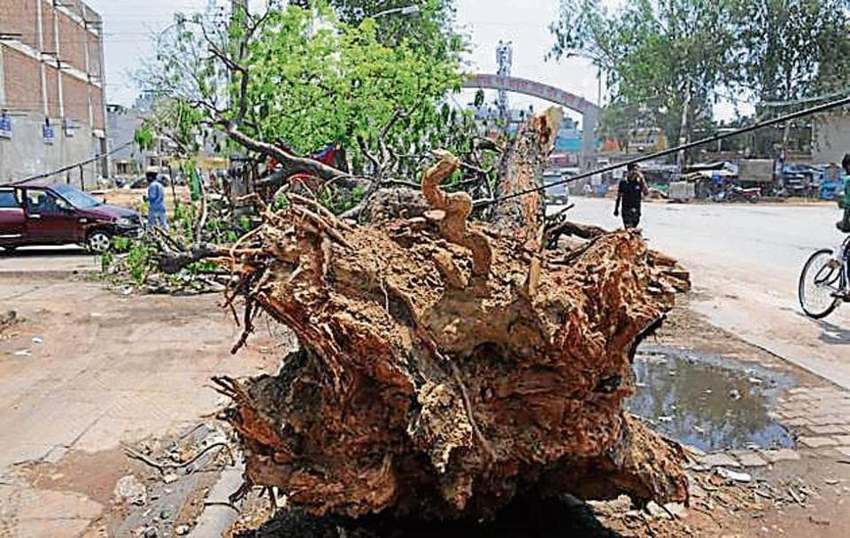 Indiscriminate felling of trees to free up space for commercial and individual projects have triggered a steady loss of the city's green cover.