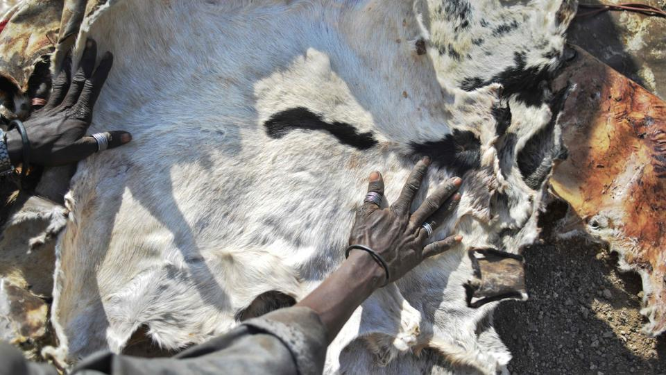 A Turkana woman lays out hides skinned from animals she lost due to a biting drought. (TONY KARUMBA / AFP)