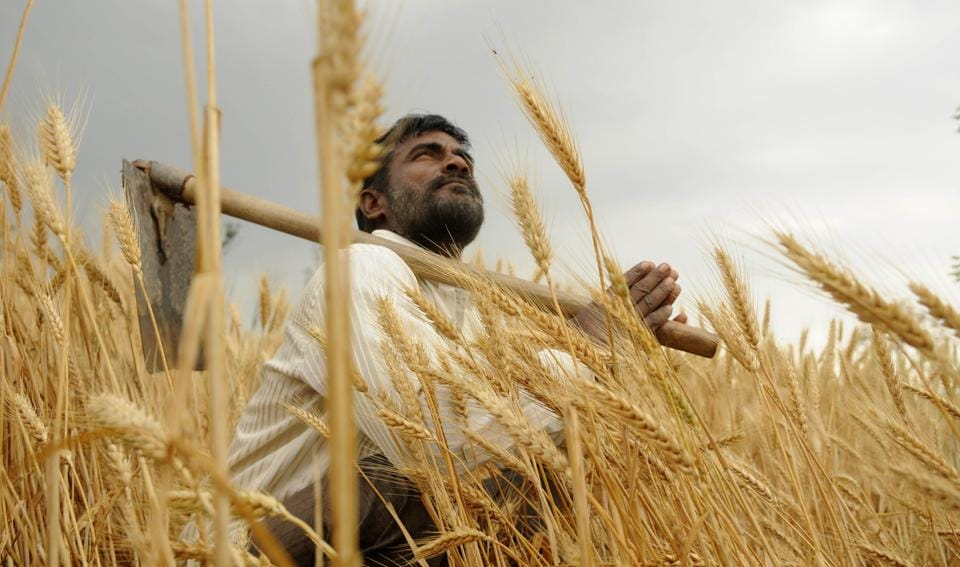 Rainfall,strong winds,wheat harvest