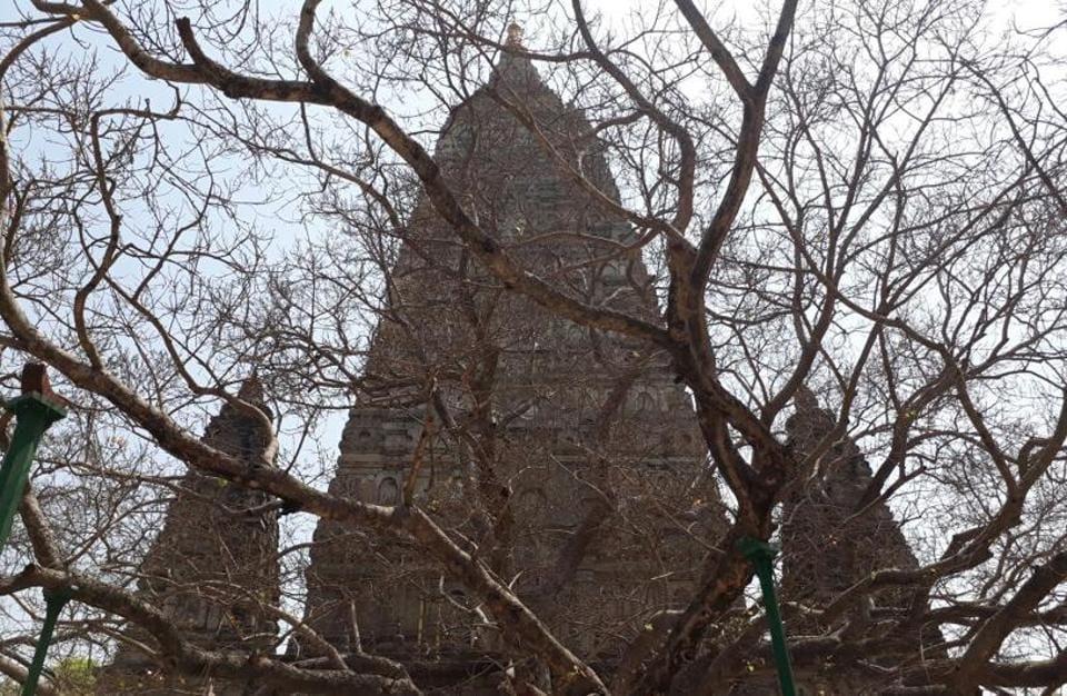 The Bodhi tree sans leaves at Bodh Gaya. Rajesh Kumar/HT Photo