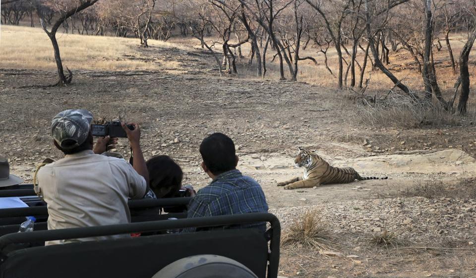 Tourists take photographs in Ranthambore Tiger Reserve, Sawai Madhopur, Rajasthan.