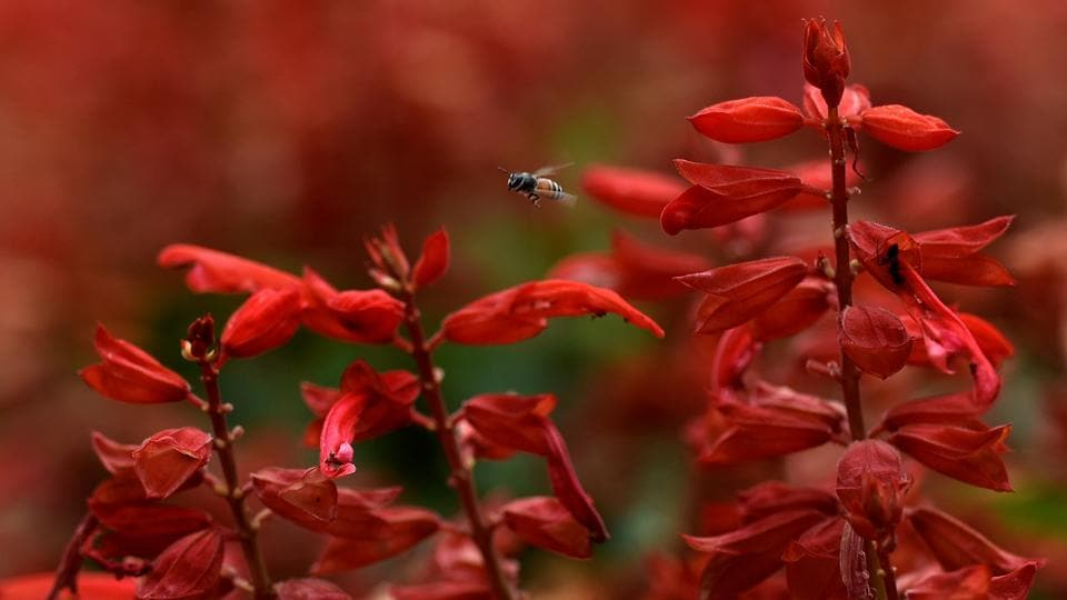 LIFE OF A FLY: Six gardeners nurture the plants.  (Anshuman Poyrekar/HT Photo)