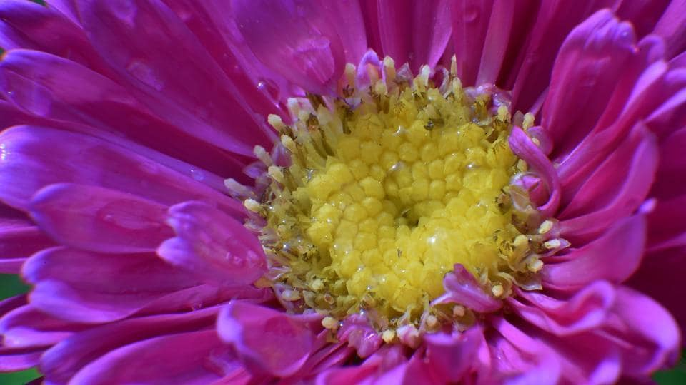 INSIDE IS OUT: A click capturing the beauty of a flower. (Anshuman Poyrekar/HT Photo)