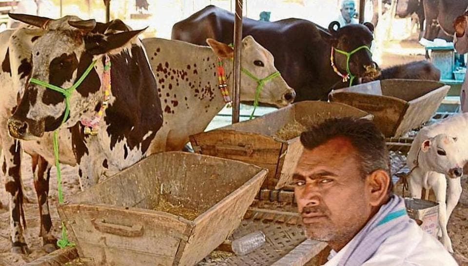 Traders at the cattle market are seething with resentment against gau rakshaks and the police.