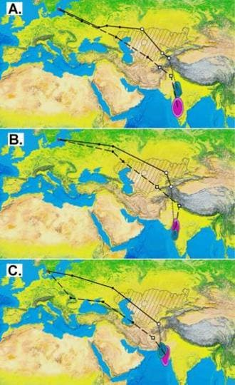 Loop migration routes of Common rosefinches: solid lines indicate autumn migration routes and broken lines indicate spring migration routes.