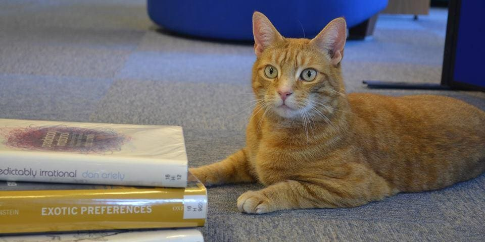 """Jasper is now the """"official mascot"""" of Cambridge University's Marshall Library."""