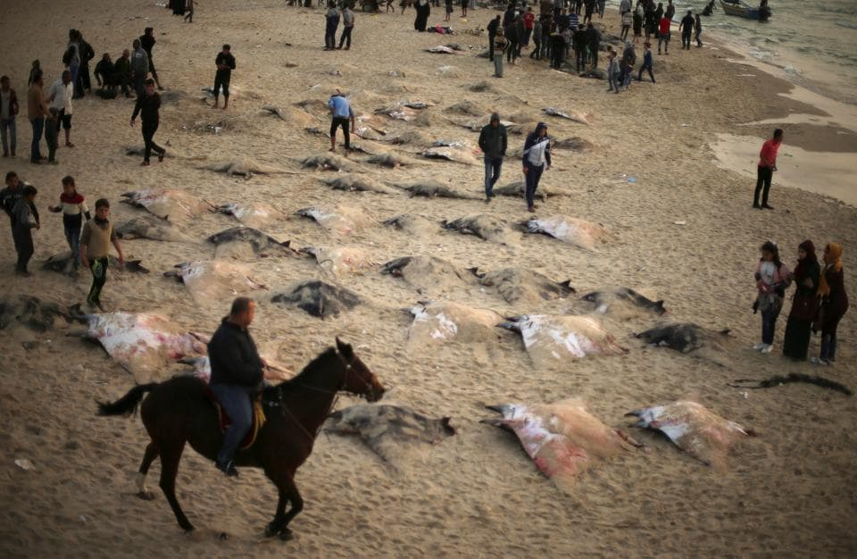 Palestinians look at Devil Rays on a beach in Gaza City April 6, 2017. (Mohammed Salem  / REUTERS)