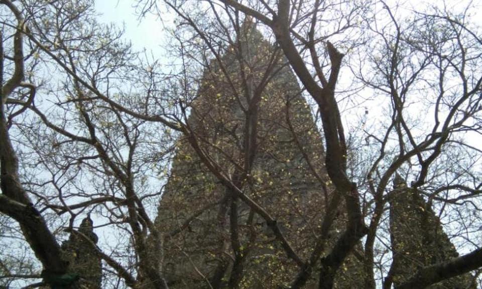 The sacred Bodhi tree at Bodh Gaya. Rajesh Kumar/HT Photo