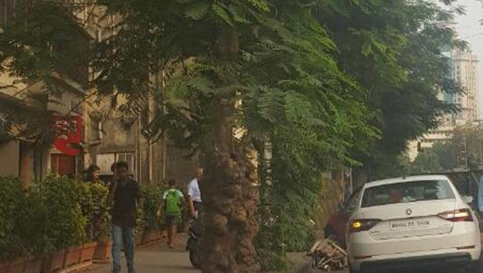 mumbai,mumbai news,mumbai trees