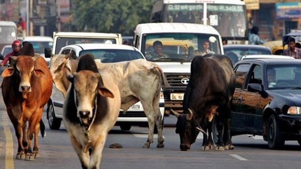 Image result for cow in road