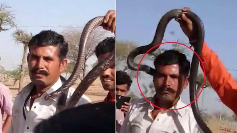 A snake charmer's stunt of putting a cobra around a man's neck proved fatal for the latter after the reptile bit him on his temple.