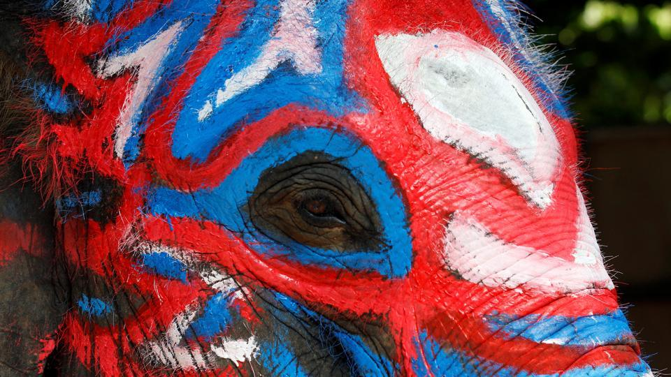 An elephant  painted blue and red celebration for the water festival in Ayutthaya province, north of Bangkok, Thailand. (REUTERS)