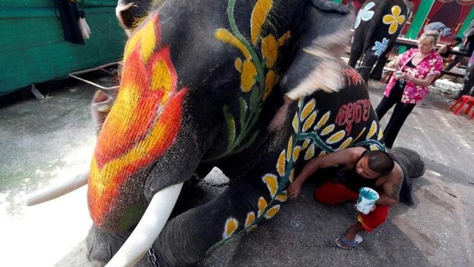 A Thai mahout paints an elephant in celebration of the Songkran water festival. (Chaiwat Subprasom  / Reuters)