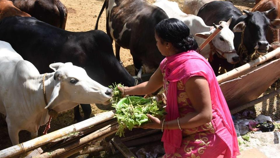 Cow protection,Gau rakshaks,RSS
