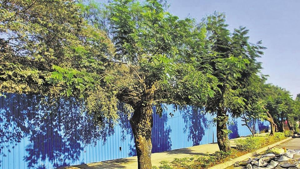 Praja Foundation,tree,green cover