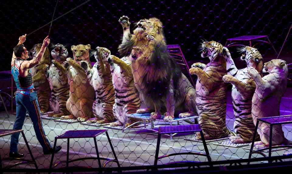 Alexander Lacey, animal trainer for the Ringling Bros. and Barnum & Bailey circus, in Washington.  (Doug Mills / NYT)