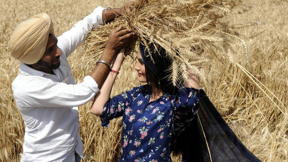 College students enact traditional harvest scenes on the eve of Baisakhi in a wheat field on Sirhind Road in Patiala on Wednesday, April 12. (Bharat Bhushan/HT)